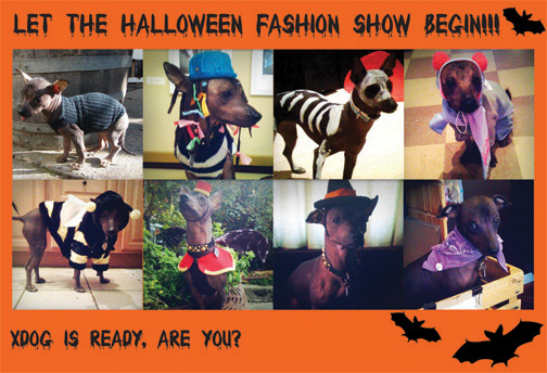 its halloween costume contest time normally we have multiple winners for our contests but this time were changing it up only one dog will walk away with